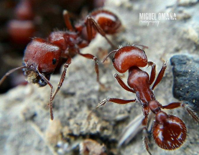 Ants Macro World
